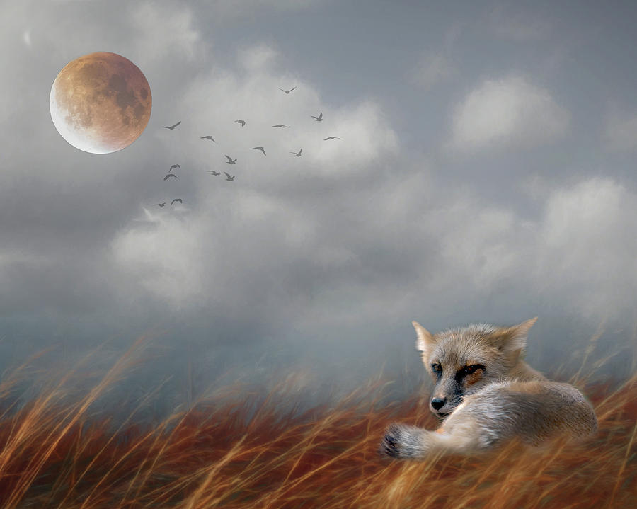 Red Fox in the Moonlight by Rebecca Cozart
