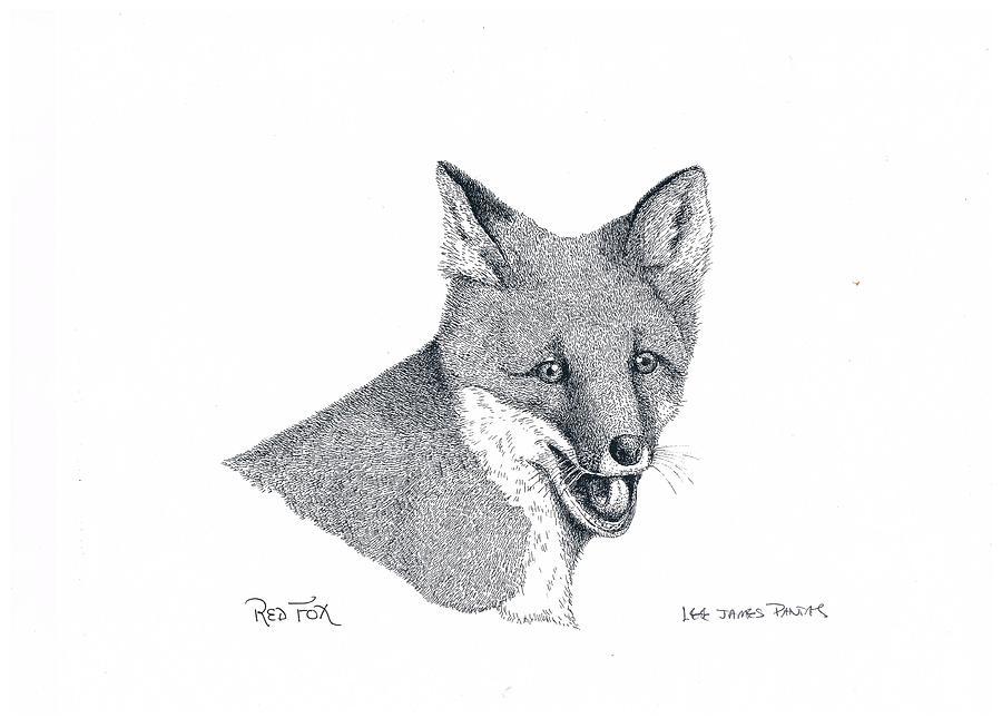 Fox Drawing - Red Fox by Lee Pantas