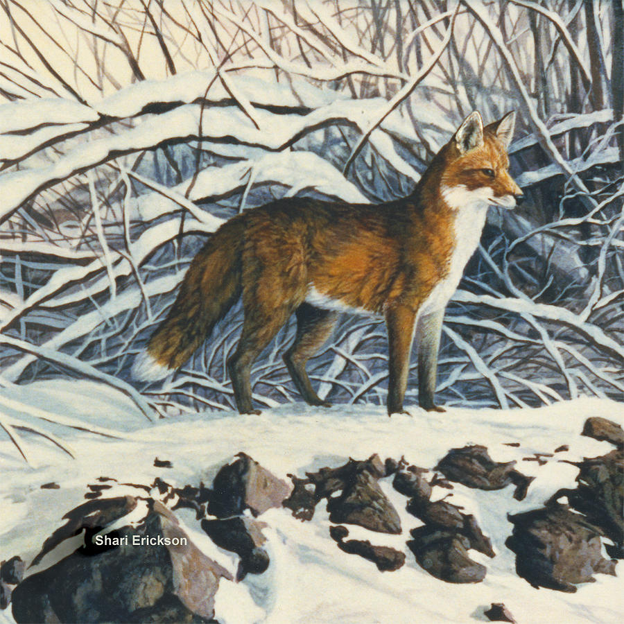 Red Fox Painting - Red Fox by Shari Erickson