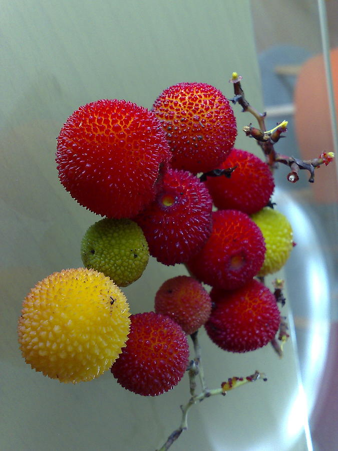 Red Fruit  Photograph by Kostas Antoniou