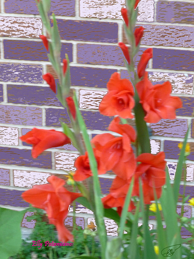 RED GLADIOLAS by Elly Potamianos