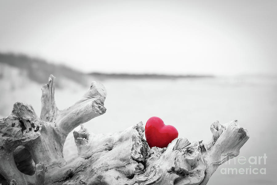 Red Heart In A Tree Trunk On The Beach Love Symbol Against
