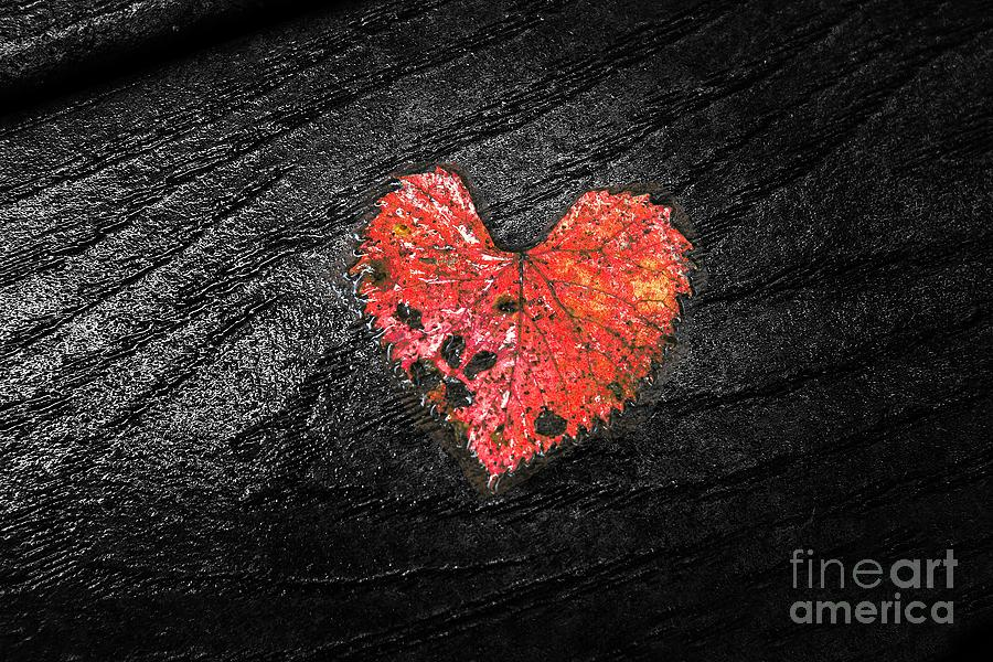 Red Heart by Traci Law