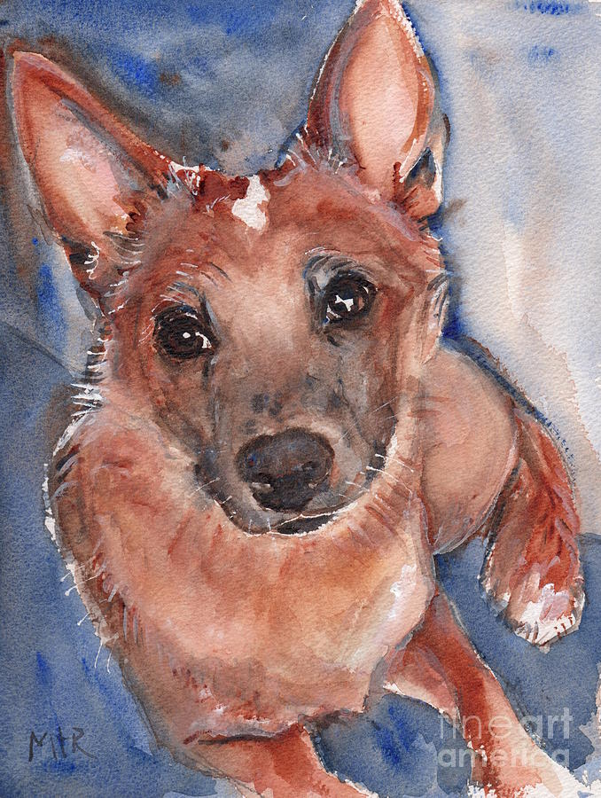 Red Heeler Painting - Red Heeler Pup by Marias Watercolor