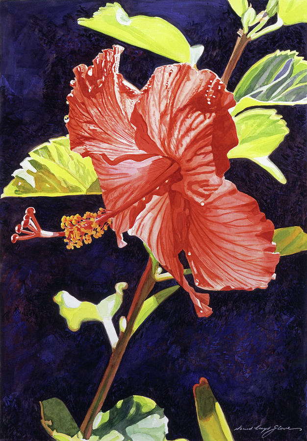 Floral Painting - Red Hibiscus by David Lloyd Glover