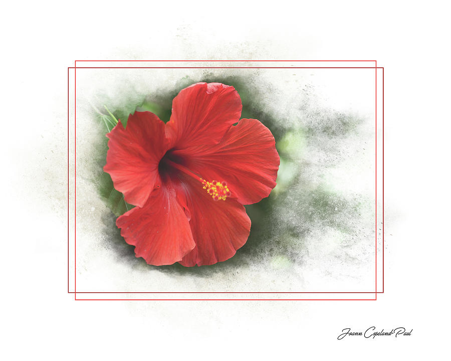 Red Hibiscus by Joann Copeland-Paul