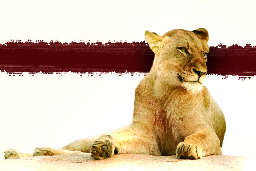 Wildlife Photograph - Red Huntress by Regan Peters