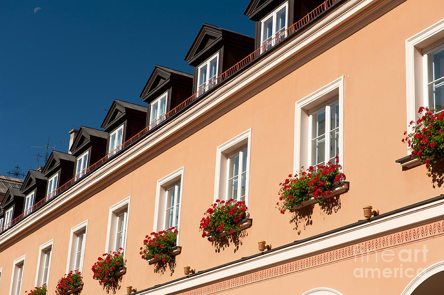Warsaw Photograph - Red Ivy Leaved Geranium Bunches by Arletta Cwalina