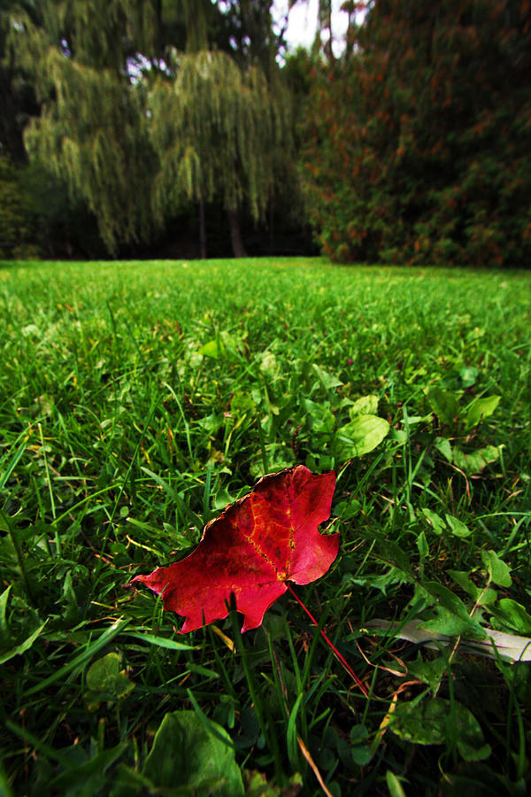 Red Leaf Photograph by Ty Helbach