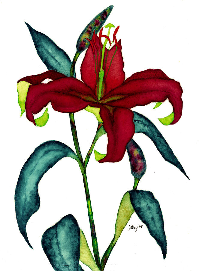 Watercolor Painting - Red Lily by Stephanie  Jolley