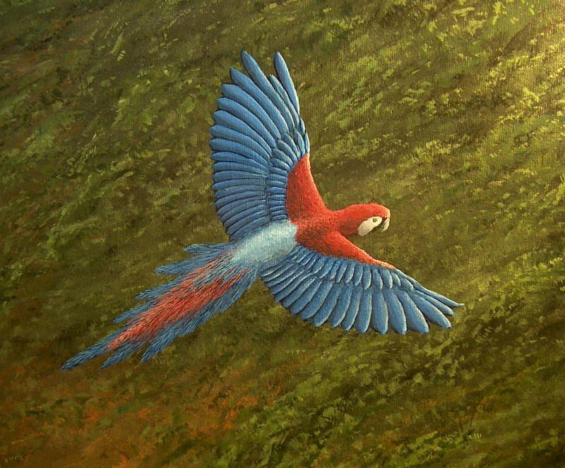 Red Macaw Painting by Cedric Colond