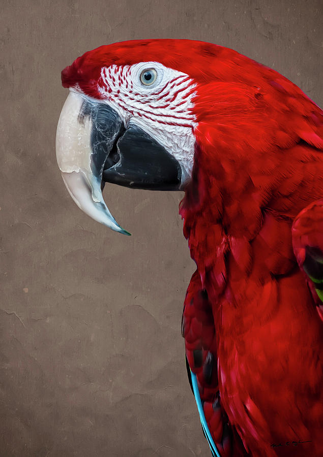 Red Macaw Photograph