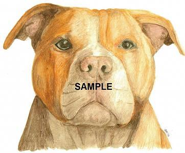 Red Nose Pit Bull Terrier Painting - Red Nose Pit Bull by Billie Riholm