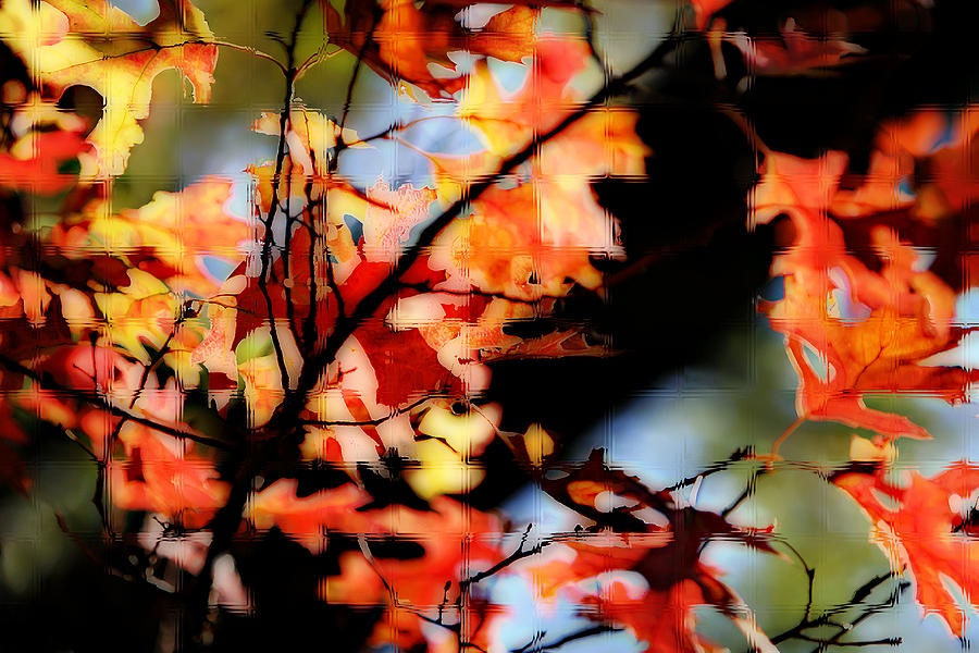 Red Oak Leaves In Fall Photograph by Linda Phelps