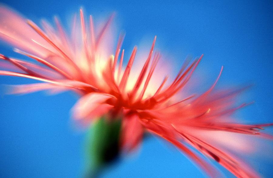 Bright Photograph - Red On Blue by John Manning