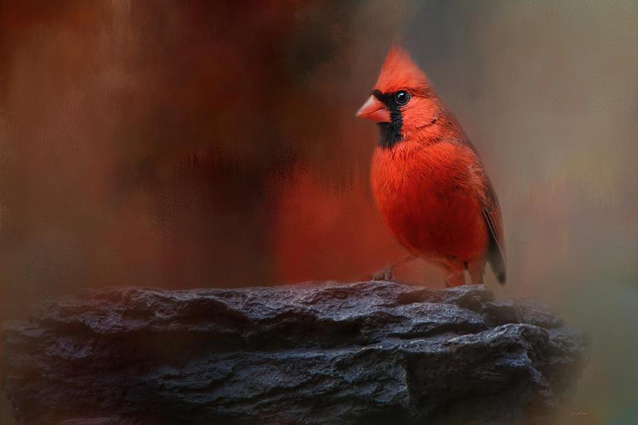 Jai Johnson Photograph - Red On The Rocks - Cardinal Bird Art by Jai Johnson
