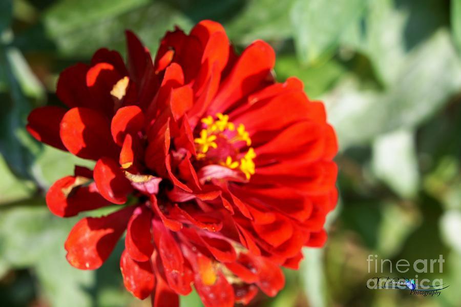 Red Orange Summer Beauty Photograph