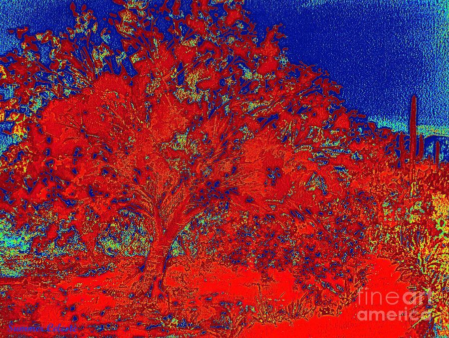 Red Palo Verdi by Summer Celeste