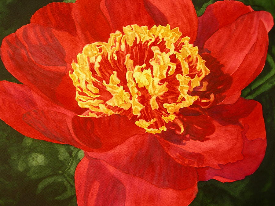 Red Flower Painting - Red Peony by Dottie Seymour