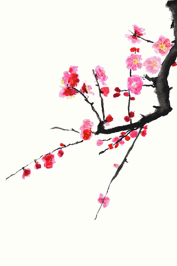 red plum flowers painting by color color