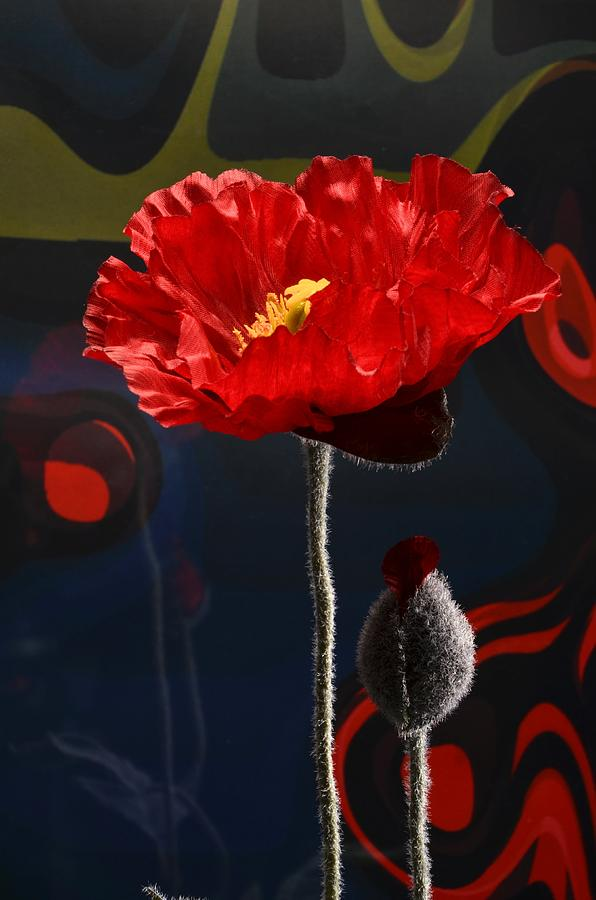 Red Photograph - Red Poppy by Alcy Neidlinger