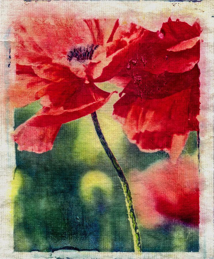 Flora Photograph - Red Poppy by Jill Greenaway