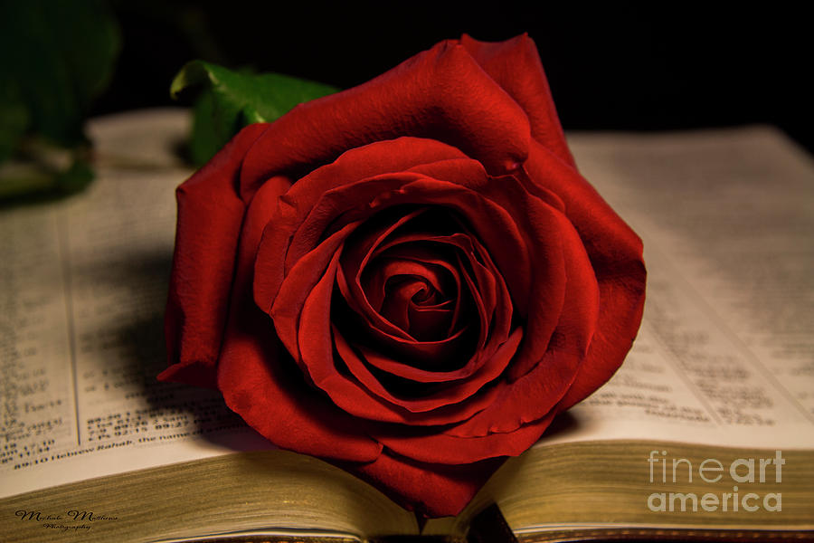 Red Red Rose by Mechala Matthews