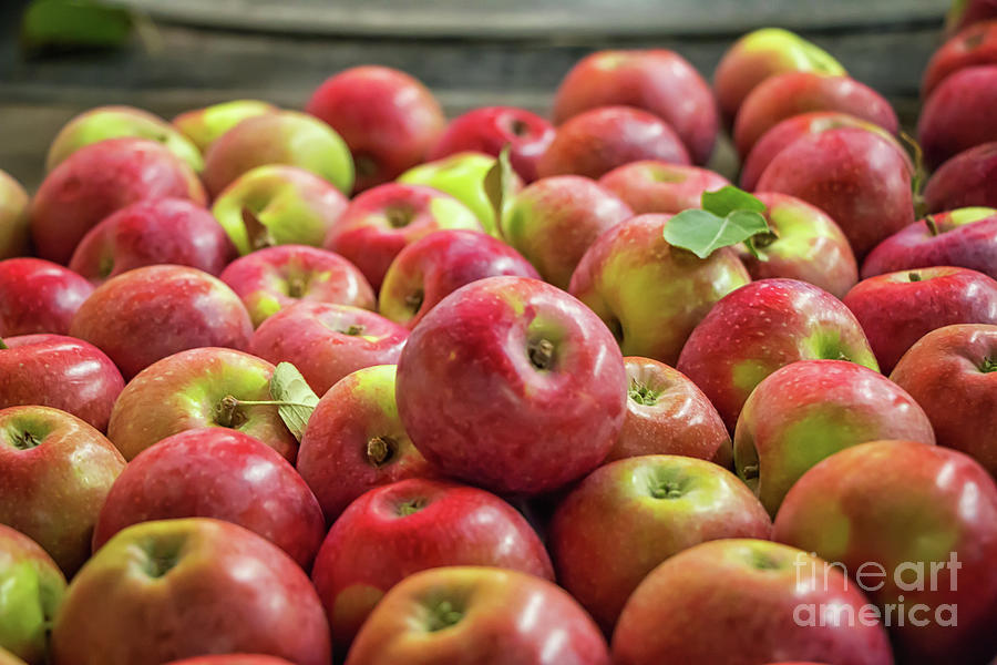 Apples Photograph - Red Ripe Apples by Elizabeth Dow