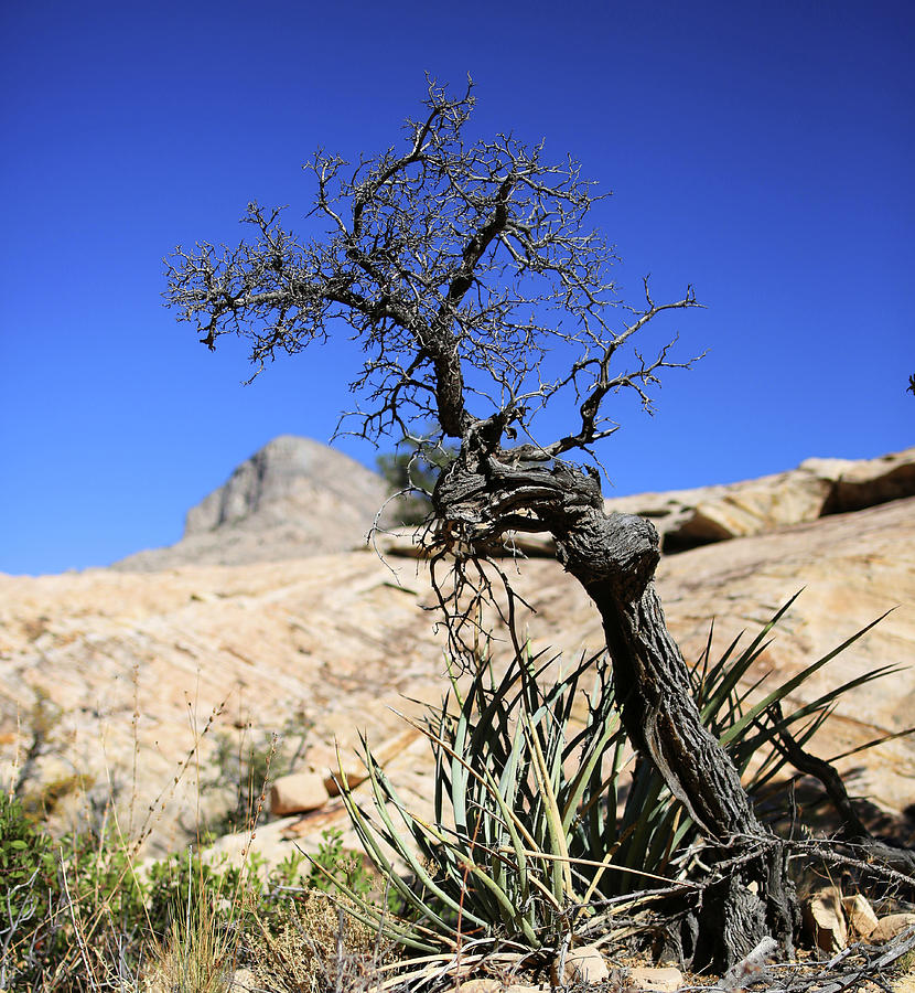 Red Rock Canyon Photograph - Red Rock Canyon Nv 10 by Chris Brannen