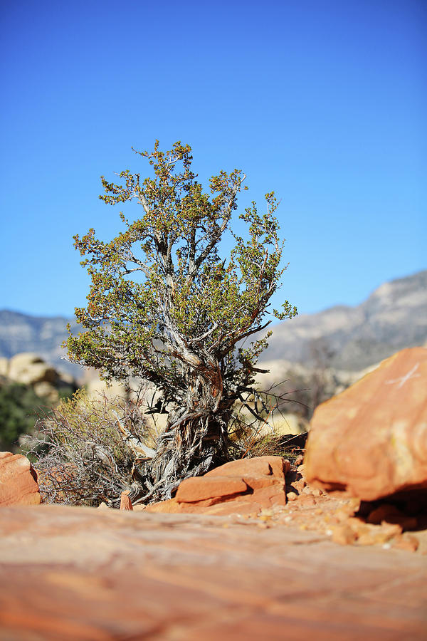 Red Rock Canyon Photograph - Red Rock Canyon Nv 3 by Chris Brannen