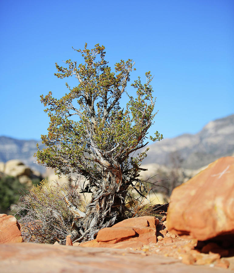 Red Rock Canyon Photograph - Red Rock Canyon Nv 4 by Chris Brannen