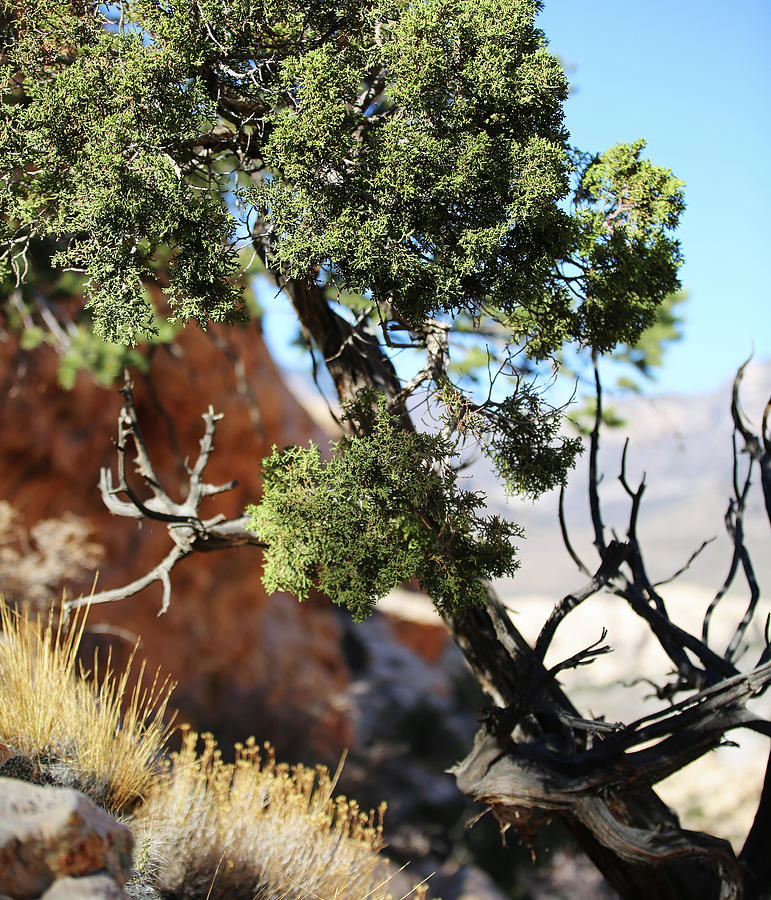 Red Rock Canyon Photograph - Red Rock Canyon Nv 5 by Chris Brannen