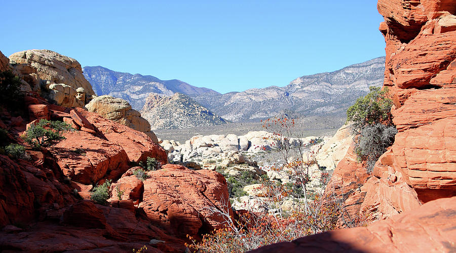 Red Rock Canyon Photograph - Red Rock Canyon Nv 8 by Chris Brannen