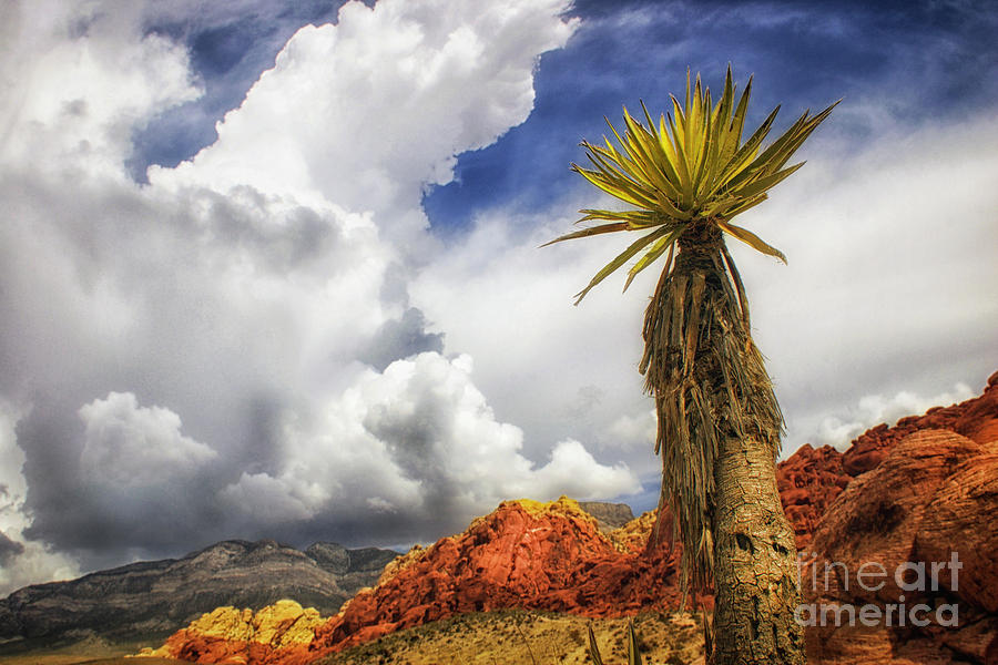 Red Rock Canyon Vintage View Of A Yucca Sky And Rocks Photograph