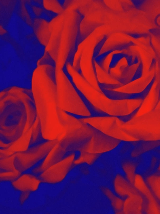 Floral Photograph - Red, Rose And Blue by Susan Maxwell Schmidt