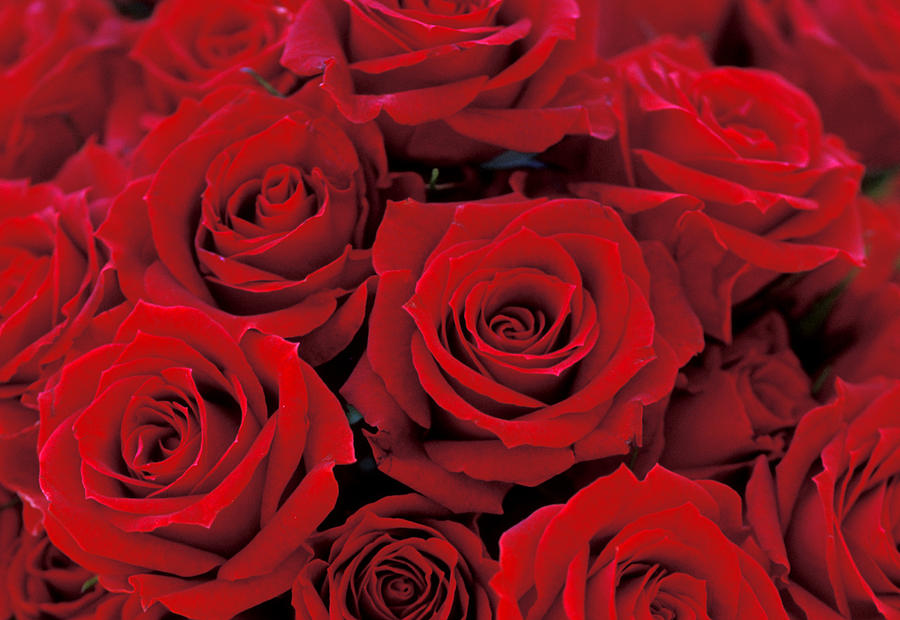 Red Roses Photograph - Red Rose Bouquet by Kathy Yates
