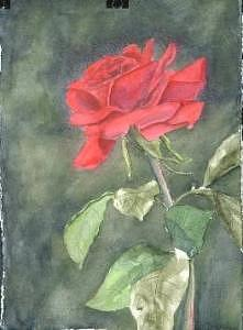 Floral Painting - Red Rose  by Diane Ziemski