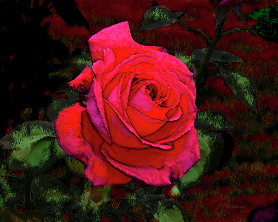 Red Photograph - Red Rose by Joe Halinar