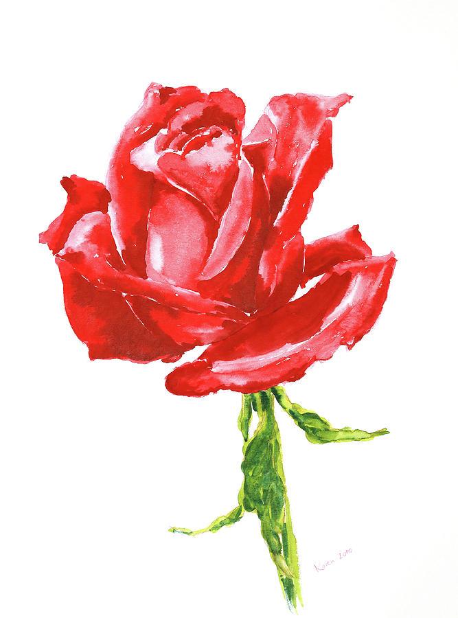 Red Rose Watercolor Painting Painting By Karen Kaspar