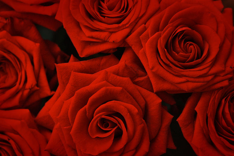 Red Rose Pattern Photograph By Lija Baneviciute