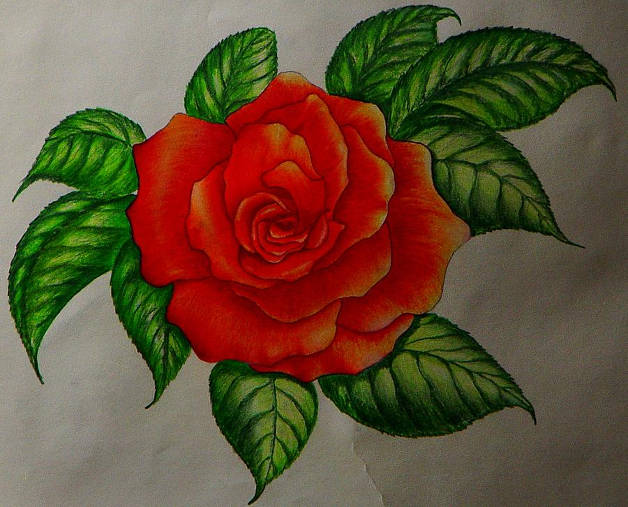 Rose Painting - Red Rose by Ron Sylvia