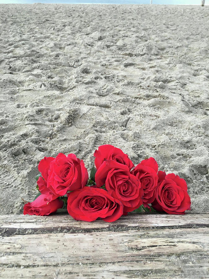 Roses Photograph - Red Roses Beachside by Morgan Chojnacki