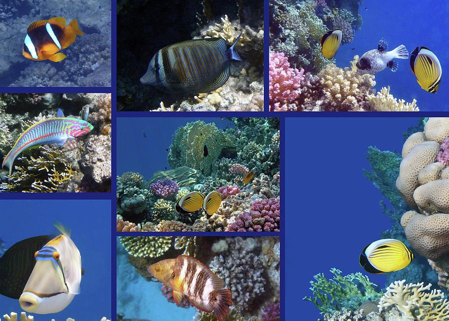 Sea Photograph - Red Sea Collage by Johanna Hurmerinta