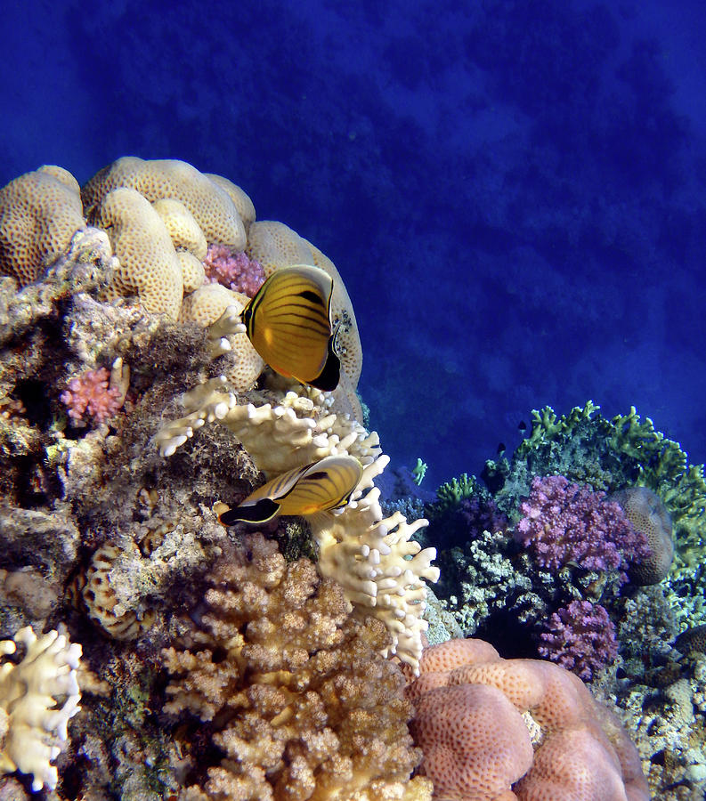 Sea Photograph - Red Sea Exotic World by Johanna Hurmerinta