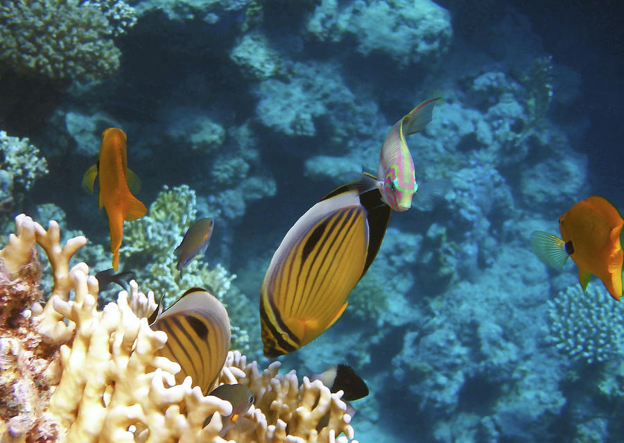 Sea Photograph - Red Sea Magical World by Johanna Hurmerinta