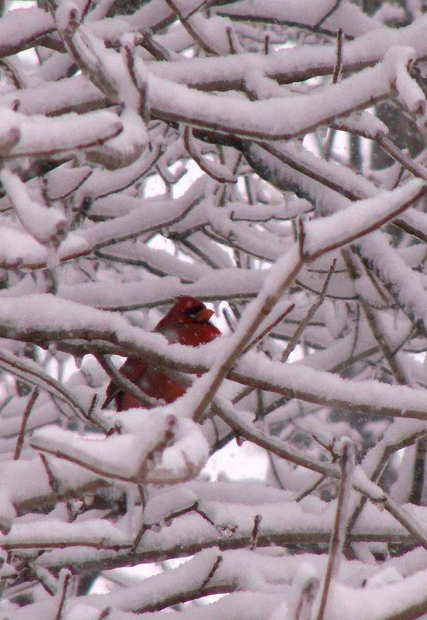 Nature Photograph - Red Sentry by Patrick Cole