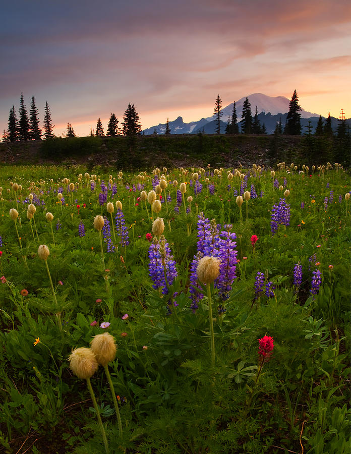 Anenome Photograph - Red Sky Meadow by Mike  Dawson