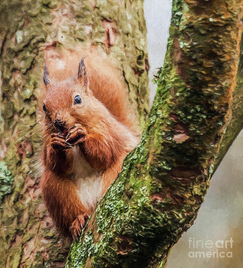 Red Squirrel, feeding by Liz Leyden