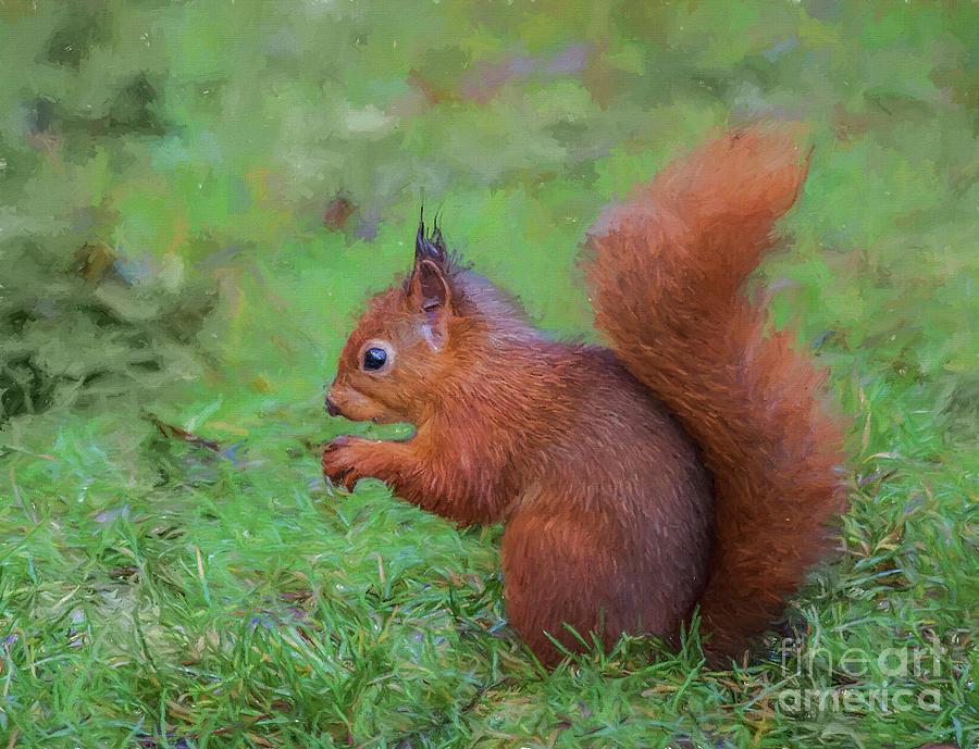 Red Squirrel profile by Liz Leyden