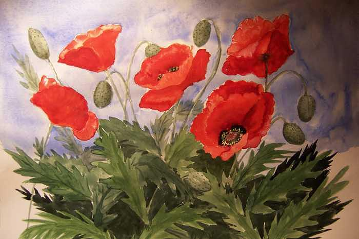 Red Summer Poppies Painting by Vivian Esler Trout